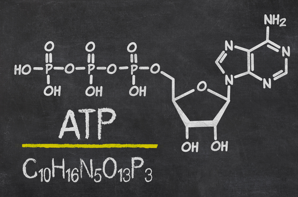 "ATP molecule is the universal metabolic ""currency"": it provides energy to drive all processes in living cells. It is produced in mitochondria. Various diseases, some toxic drugs, and environmental factors may lead to dysfunctions or disorders at the cellular level and negatively affect ATP production and cause metabolic disorders."
